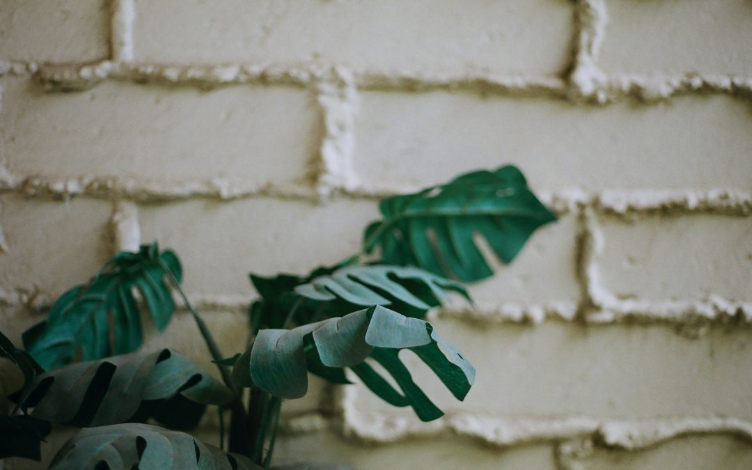 Best Fake Plants for Front Porch