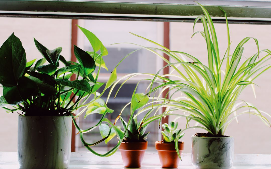 How to Make Artificial Plants Look Real